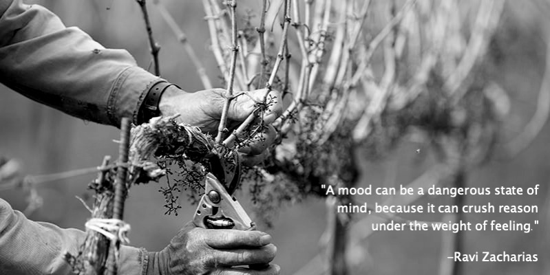 pruning-inside_Fotor